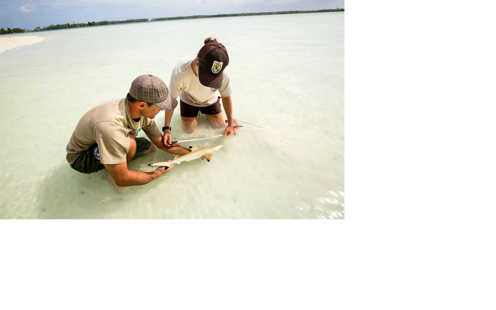 Conservancy staff Kydd Pollock and Amanda Meyer catch and measure a juvenile shark.