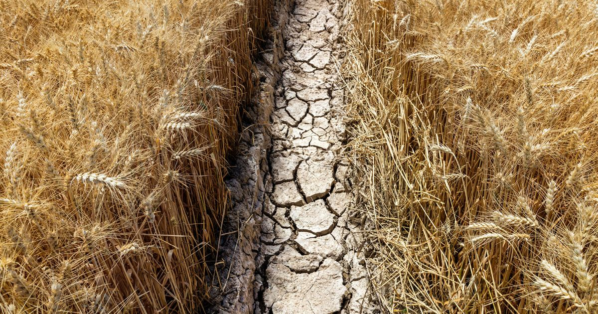 Challenging soil conditions, such as those seen on the Meaker Farm in Montrose, Colorado, could be alleviated by new soil management techniques.