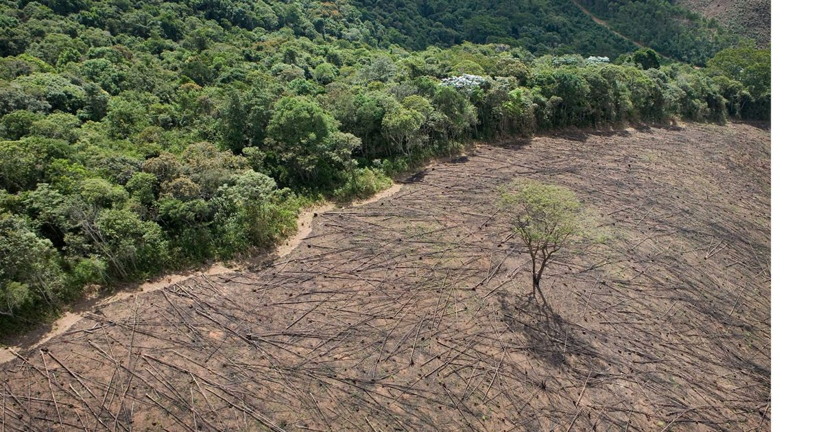 Aerial view of timber cutting near Cachoeira Reservoir.