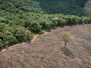 Forest being ravished by deforestation.