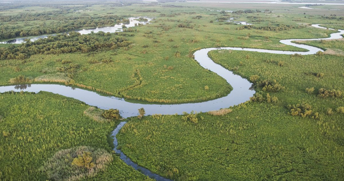 Aerial photo of a marsh and waterways winding through.