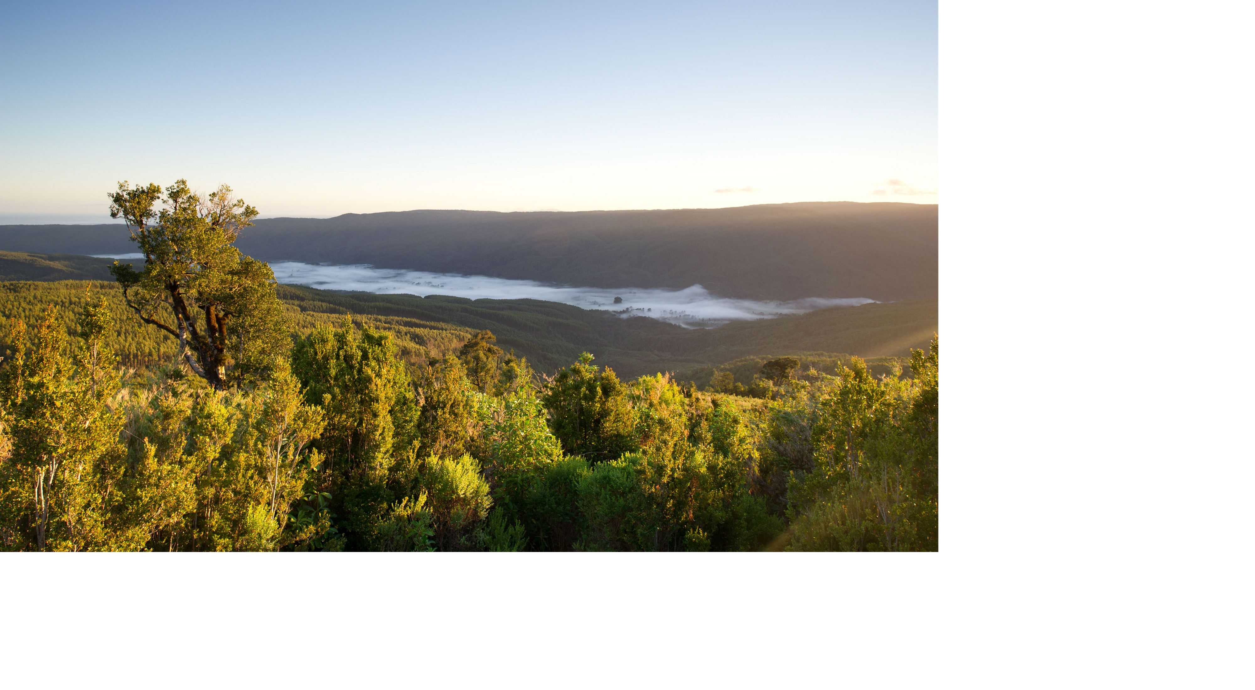 Valdivian coast reserve