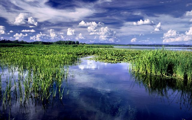 Photo of green wetlands and blue sky with white, puffy clouds.