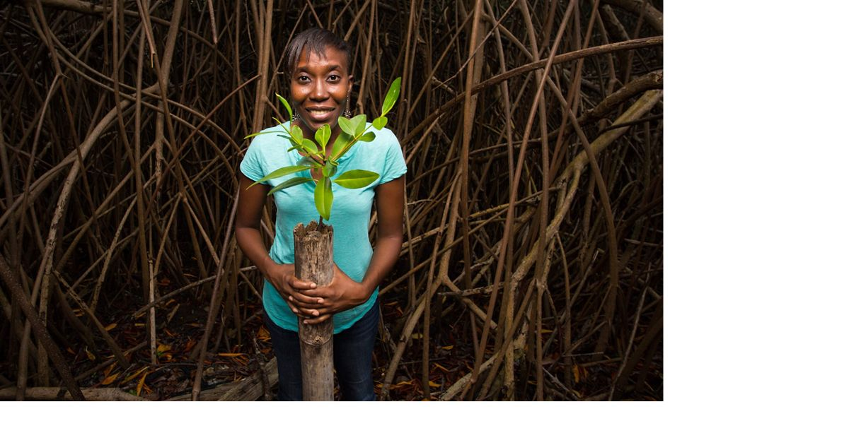 A woman holds a red mangrove cutting that's ready to be planted