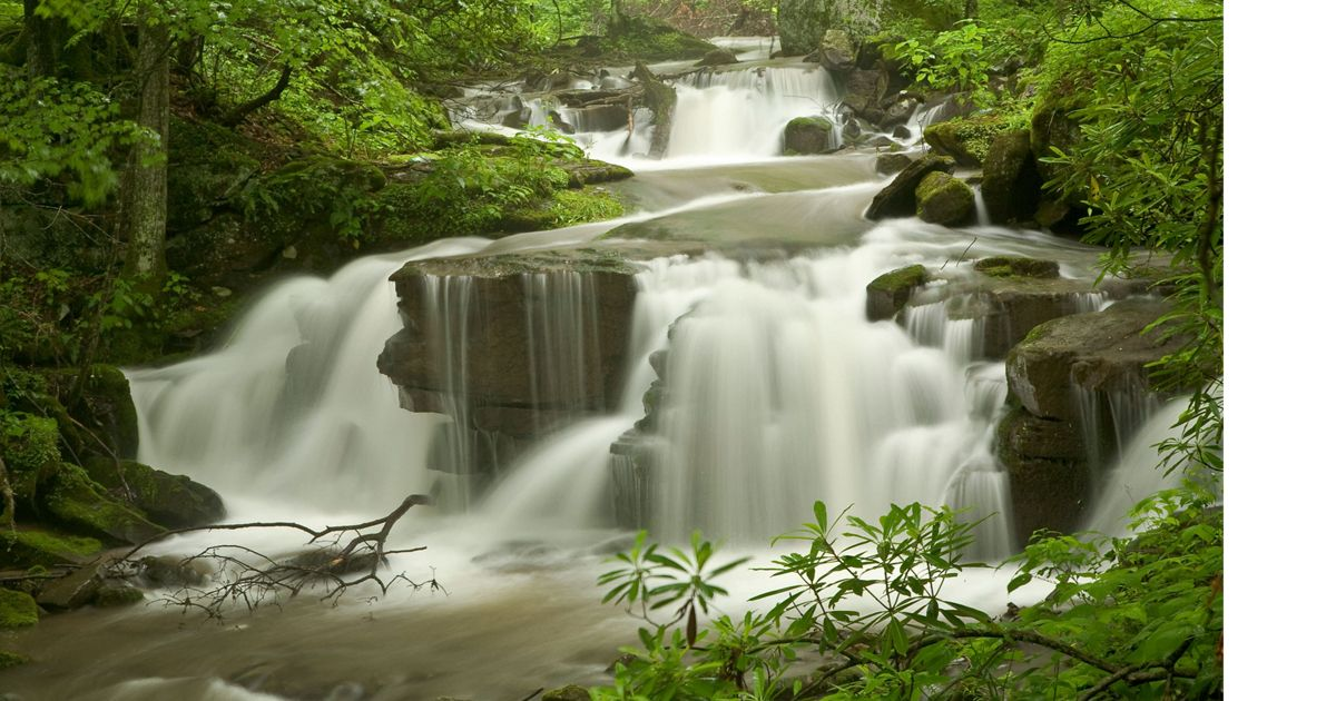 small waterfalls surrounded by green trees