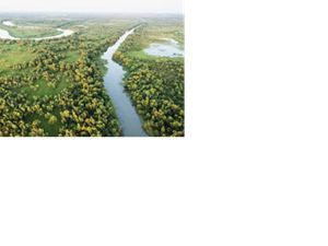 An aerial shot of a river system in the Wax Lake Delta.