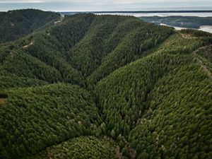 Aerial views of the Ellsworth Creek Preserve.