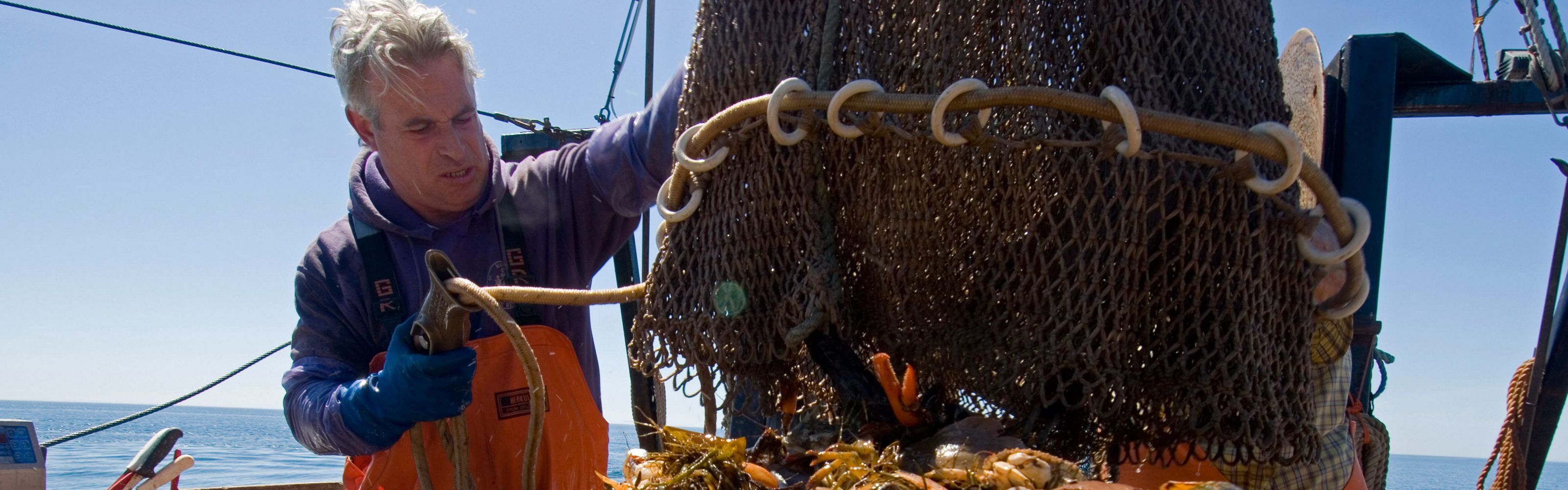 A fisherman checks his haul in the Gulf of Maine.