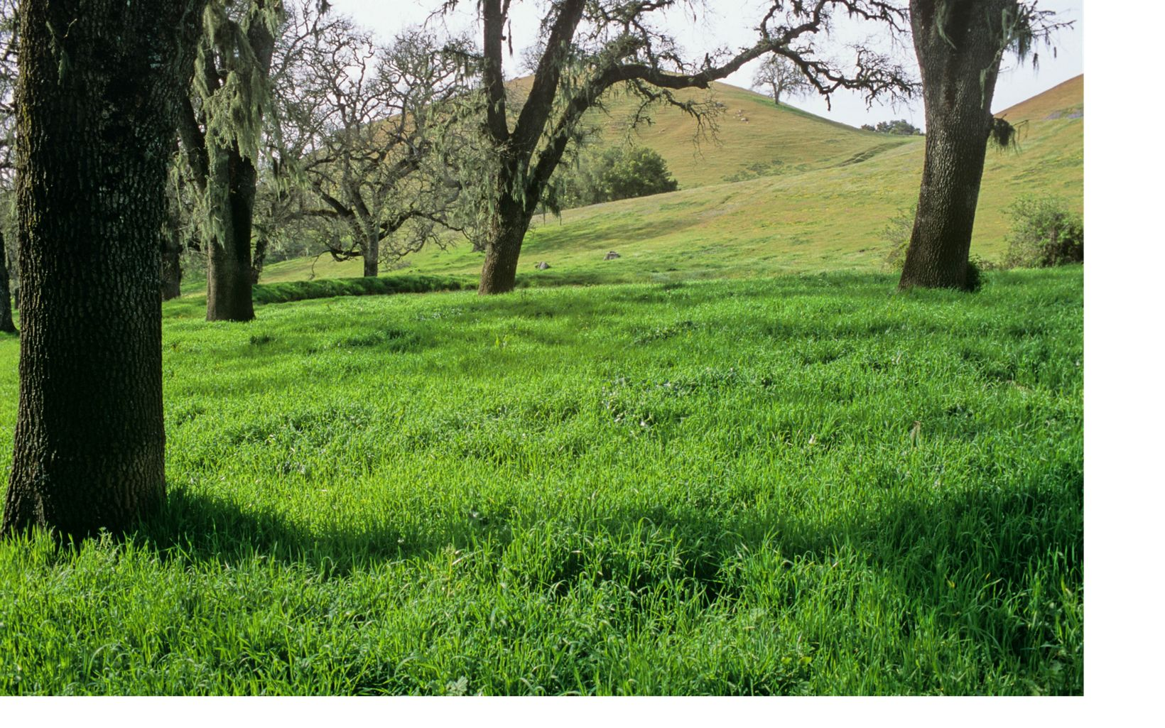 Oak woodlands cover grassy hills at this 11,000-acre working cattle ranch that has been minimally developed, leaving much of the ecosystem intact.