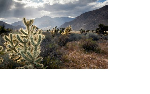 The Mojave desert scrublands of Red Rock State Park are just one of the four ecoregions that collide at Tehachapi, California.