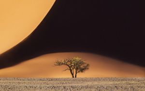 Sand dunes and a lone tree in Namibia