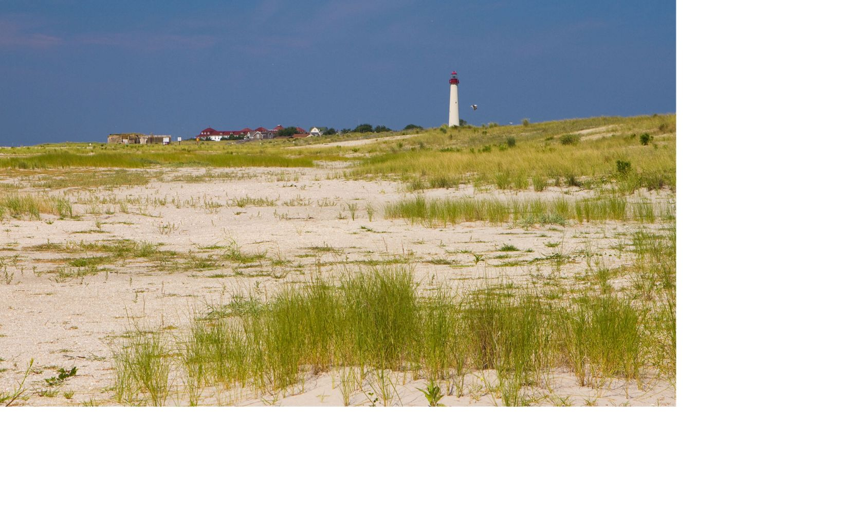 View of the lighthouse from the South Cape May Meadows