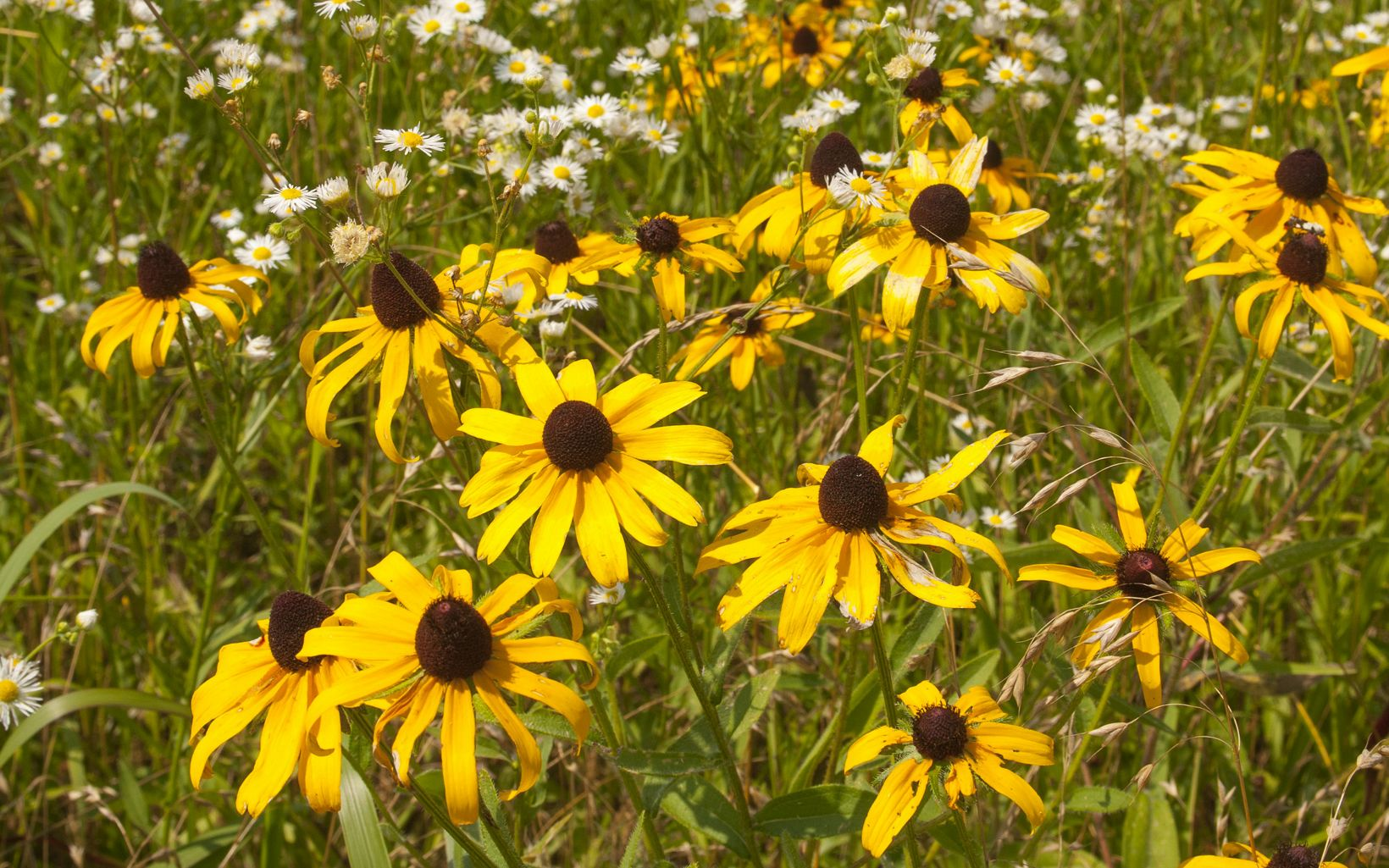 Wildflowers in  Kentucky's Big River Corridor Project