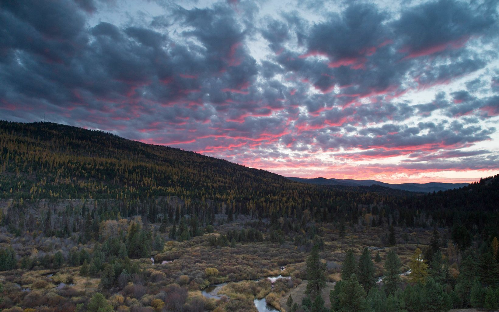 forested river sunset