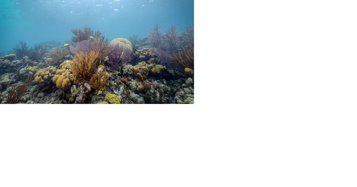 View underwater of colorful coral reef in Florida