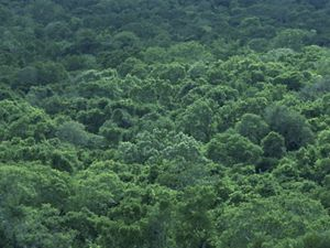 View of dense forest in the Mexican state of Campeche.