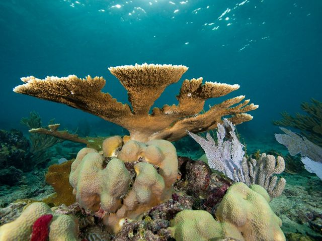 Healthy Hard Corals, photographed underwater in the protected marine park, Parque Nacional del Este.