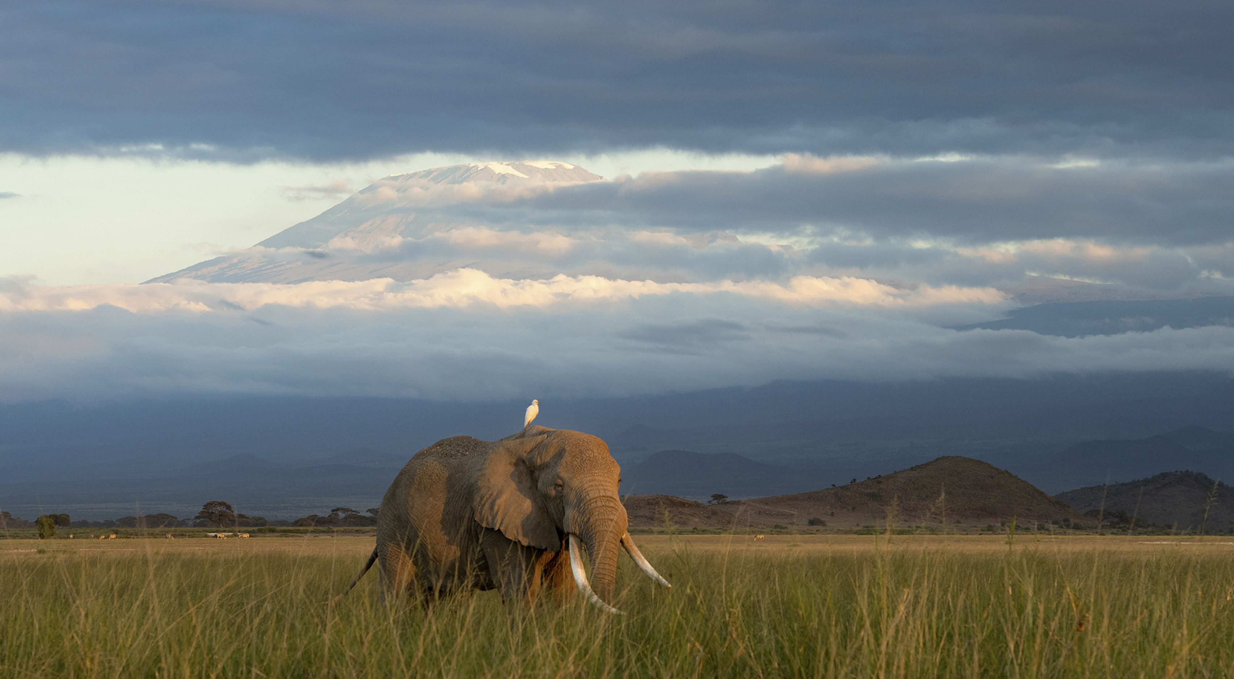 A beautiful morning watching elephants in Amboseli with Mt. Kilimanjaro in the background.