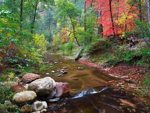 creek in a brightly colored forest
