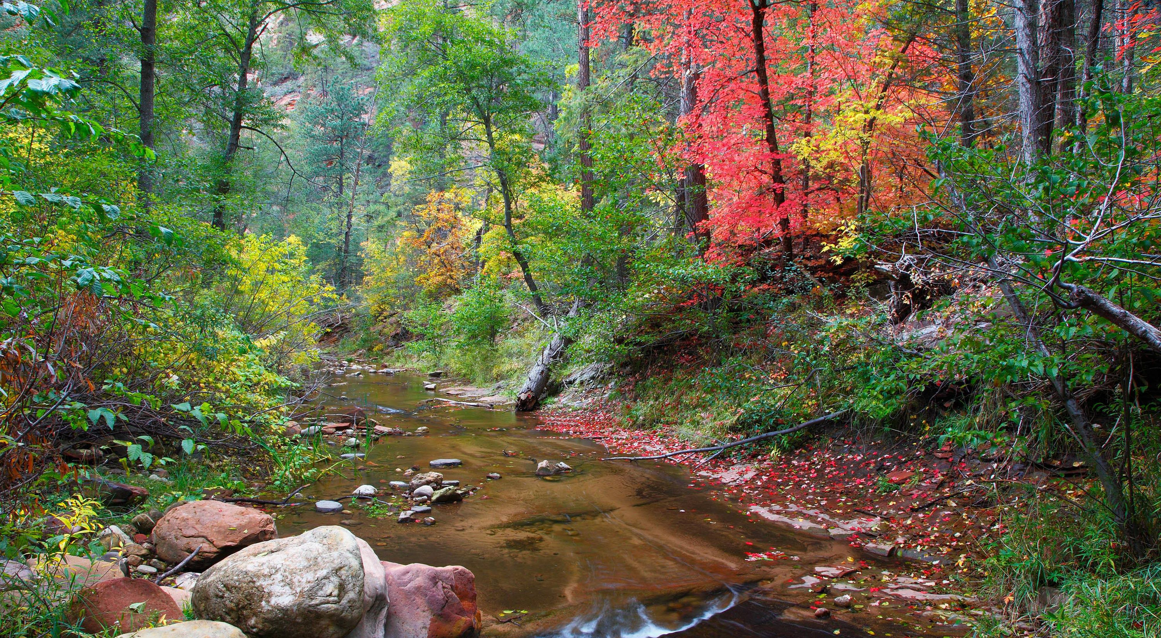 West Fork of Oak Creek Canyon in Coconino National Forest, Arizona.