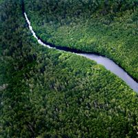 Sungai Wain Forest Reserve in East Kalimantan on the island of Borneo, Indonesia.