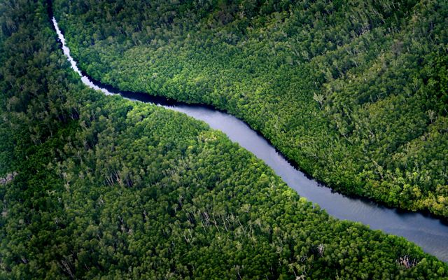 Arial photo of a forest with a river running through it
