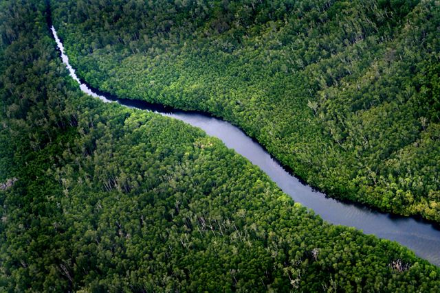 Aerial view of forests and river in Borneo, Indonesia.