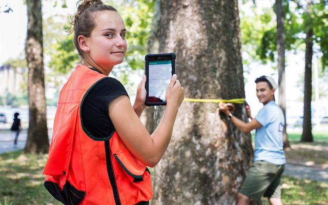 a young woman helps measure trees in a city park.