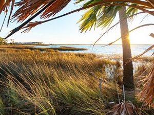St. Joseph Bay State Buffer Preserve, Port St. Joe, Florida.