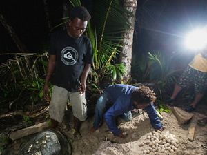 Leslie Rubaha and Linald Madada count the eggs deposited by the tenth turtle on the last night of the project on Kerehikapa Island.