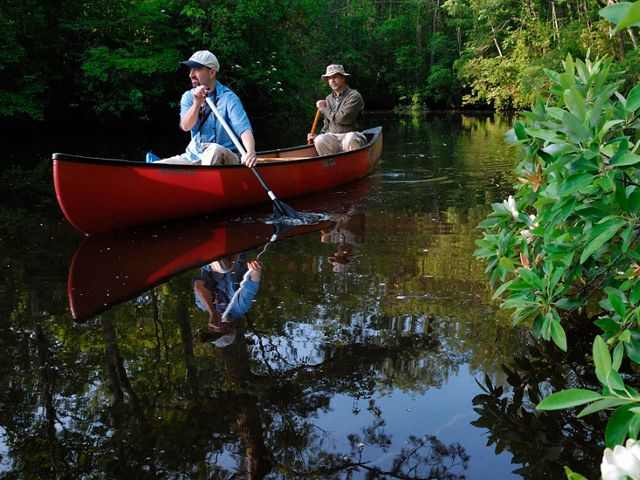 Two men paddle a red canoe along a dark green creek bordered with bright green foliage.