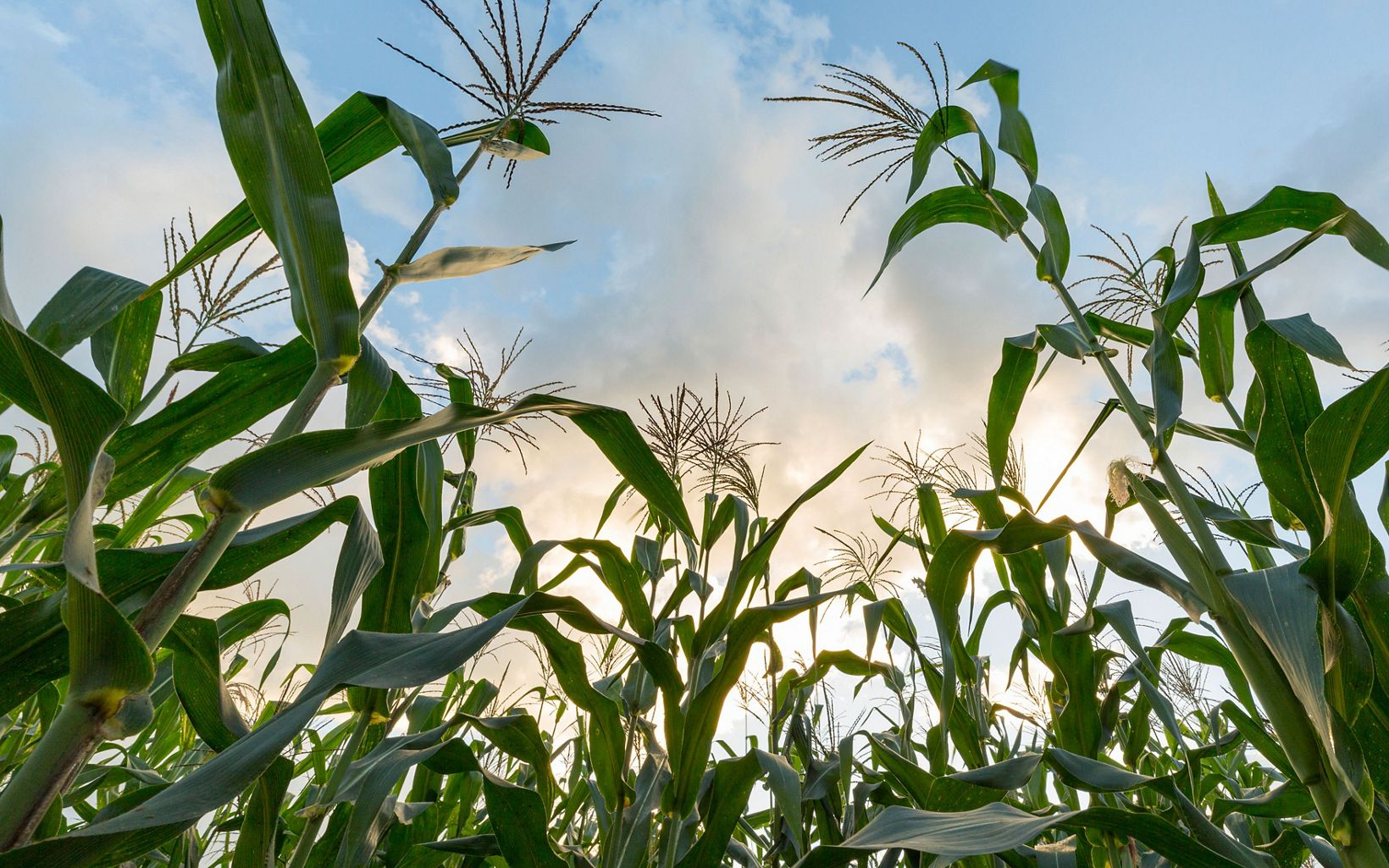 Promoting better agriculture to reduce emissions.