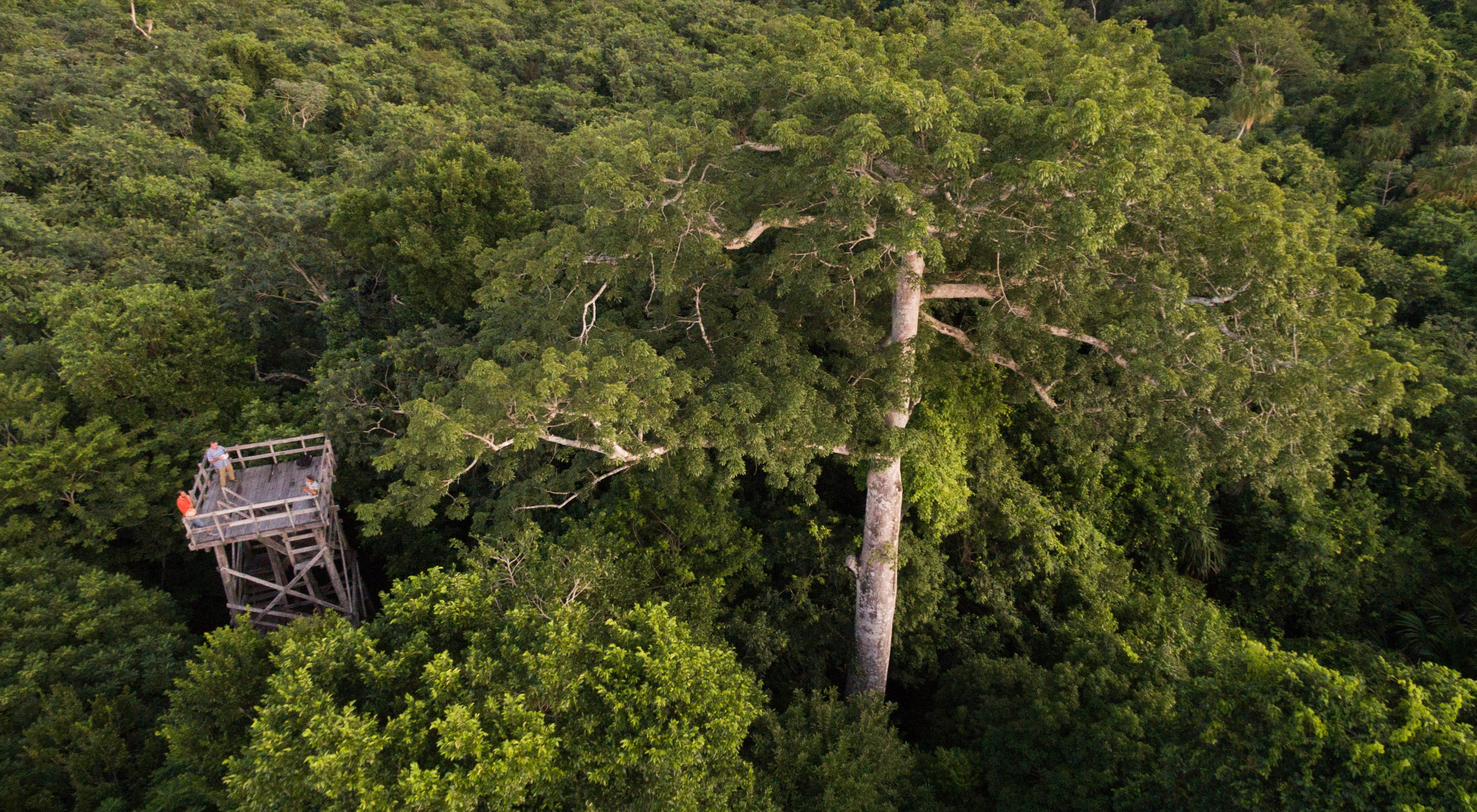 Aerial views of the tropical forest around the logging community of Noh Bec, Quintana Roo, Mexico.