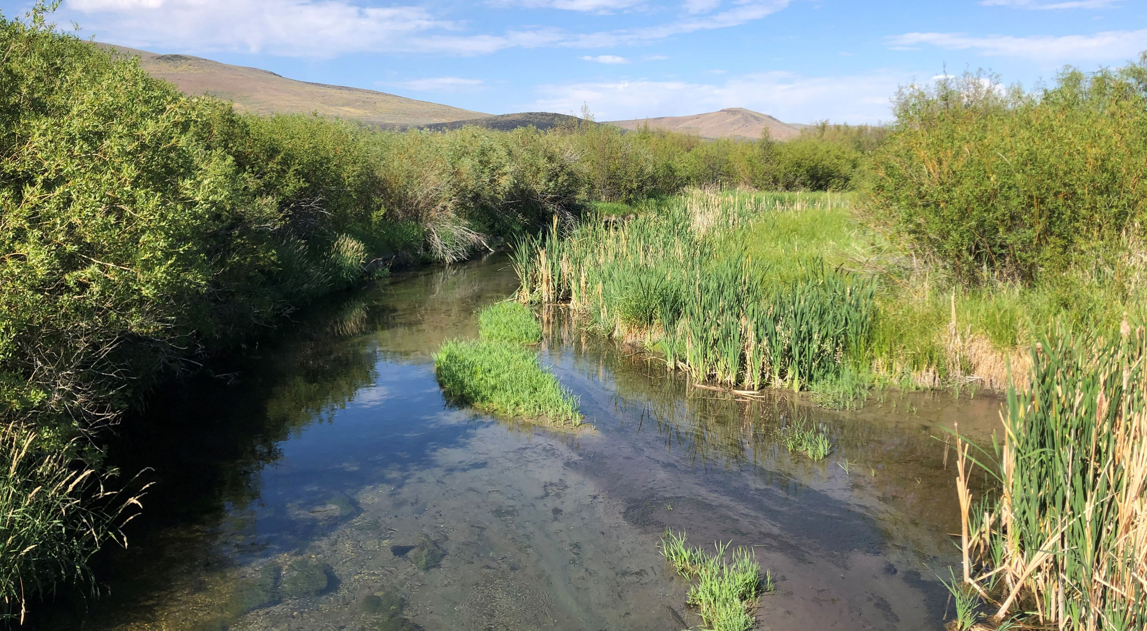 A stream meandering through willow plants with foothills in the distance.