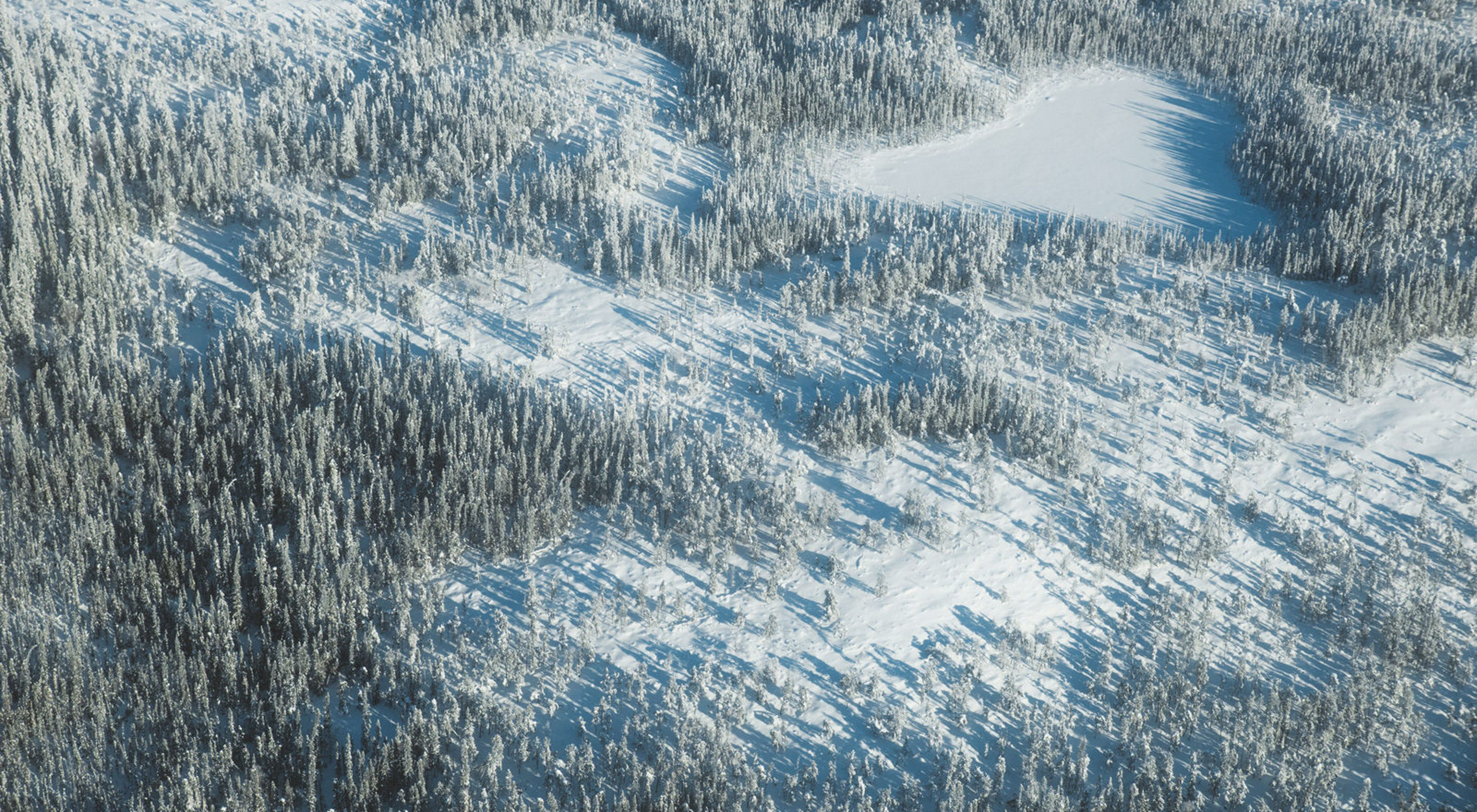 Aerial of boreal forestland in the transition zone with subarctic tundra within Thaidene Nëné in Canada's Northwest Territories.