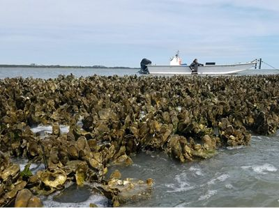 People with a boat check on a stretch of oyster reef.