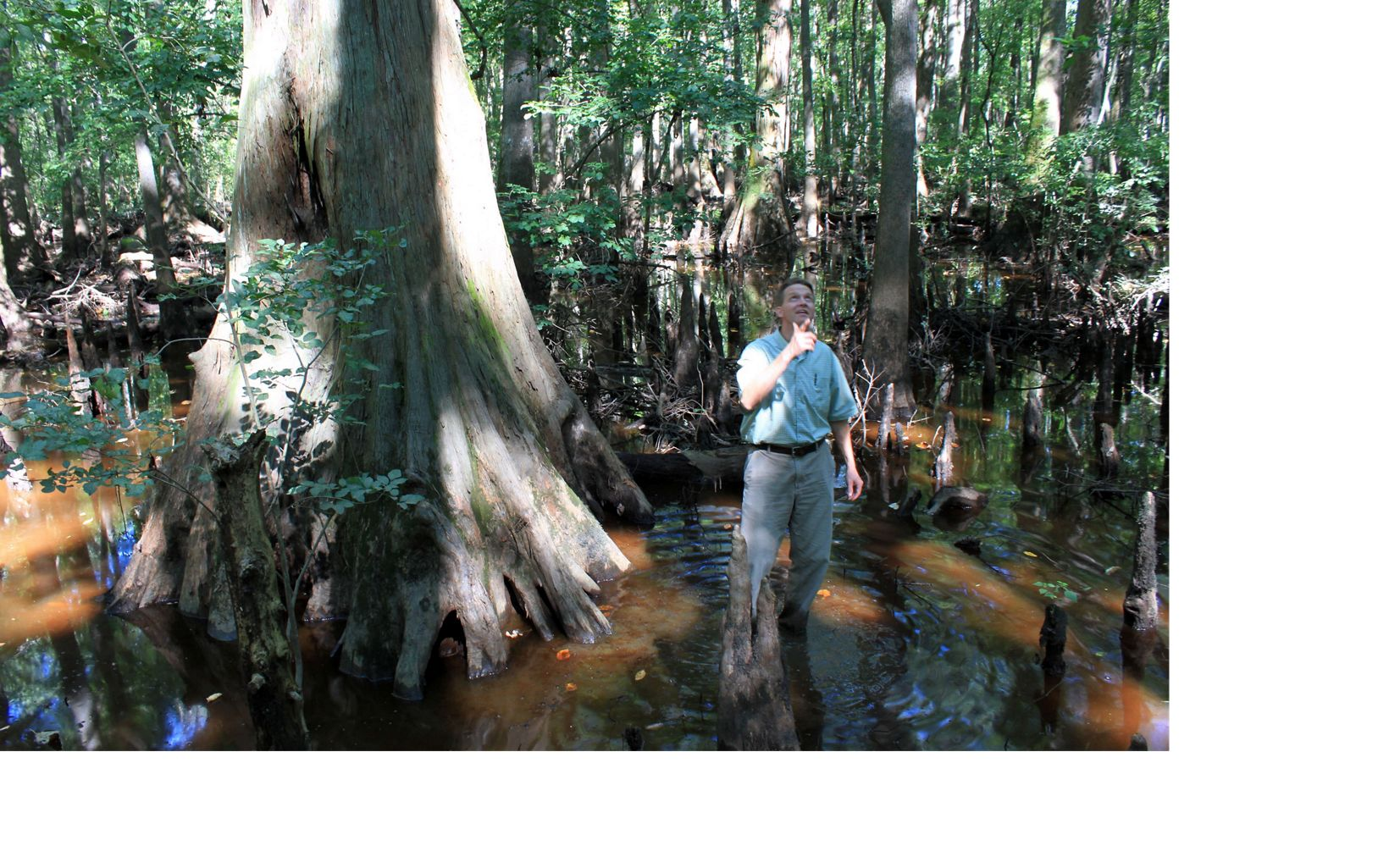 Brian van Eerden, Virginia Pinelands Program Director, stands under a towering cypress tree.
