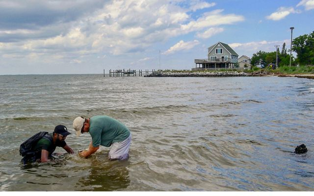 Sensors are installed in the Chesapeake Bay, on the beach, and in the marsh to measure the differences in wave energy before, during and after storm events.  Photo © Severn Smith / The Nature Conservancy