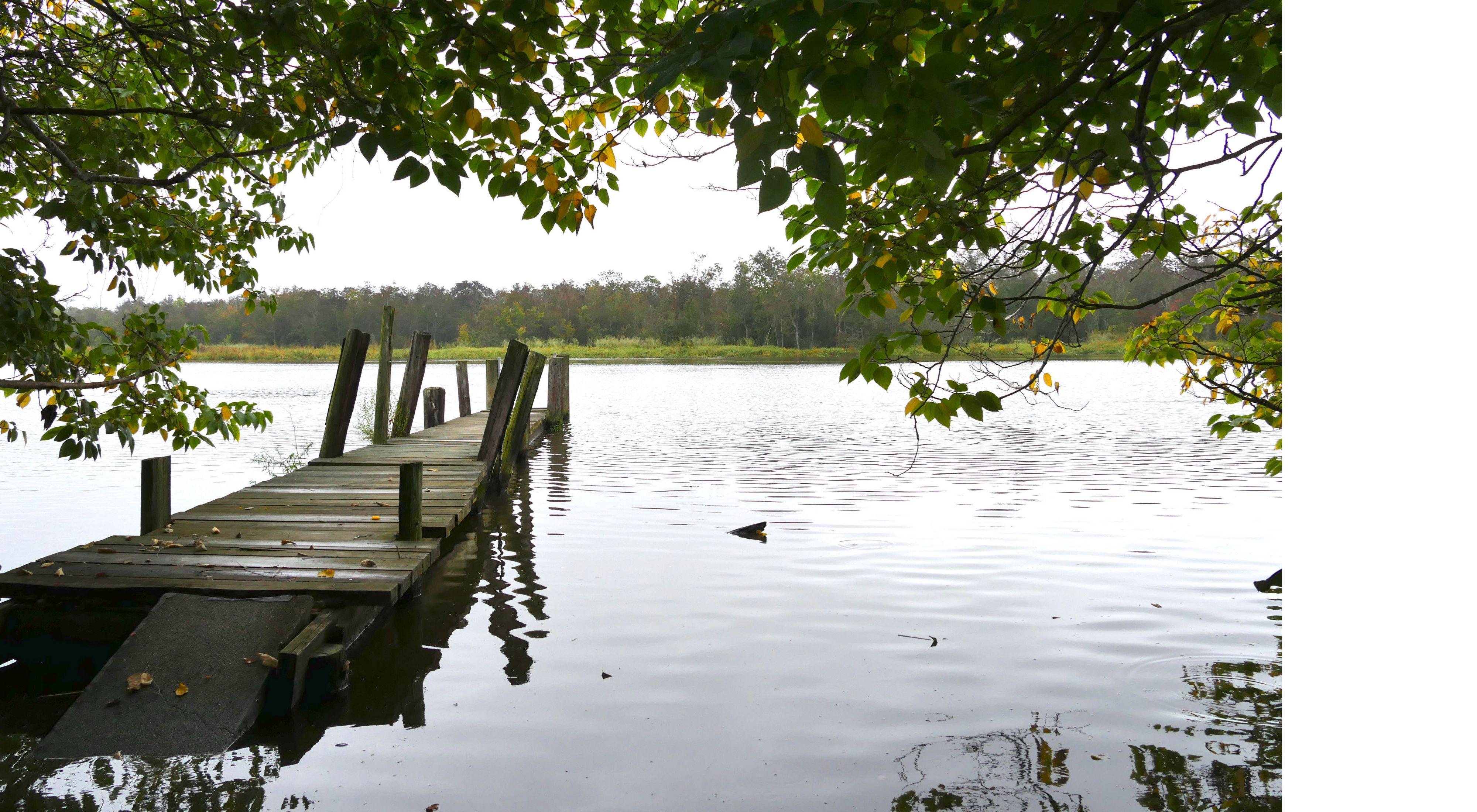 View of Marshyhope Creek