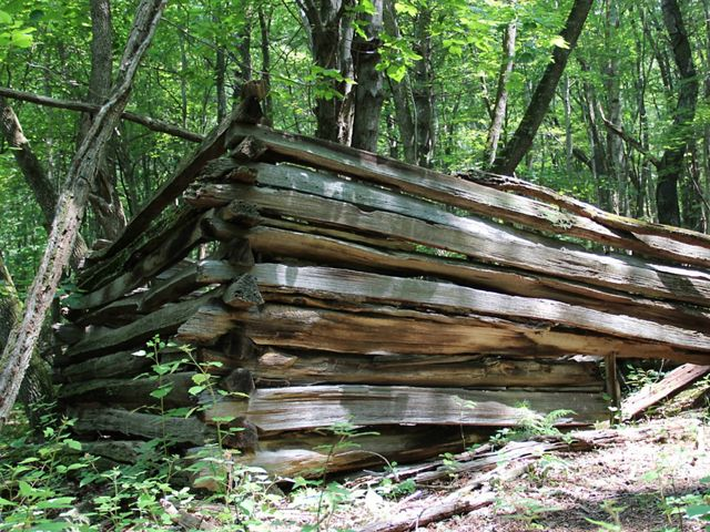 The corner of a dilapidated wooden fence from a long abandoned homestead juts out from the trees in a thick forest.
