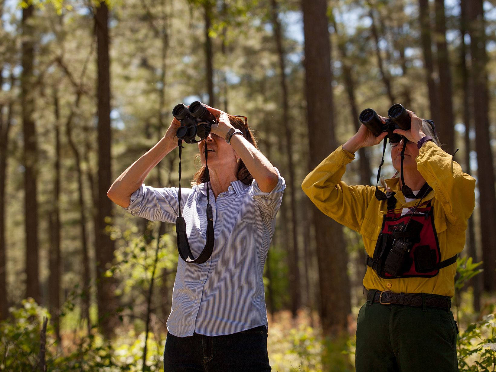 Two women stand together in a forest. They are each looking up through binoculars into the trees. Tall pine trees rise behind them.