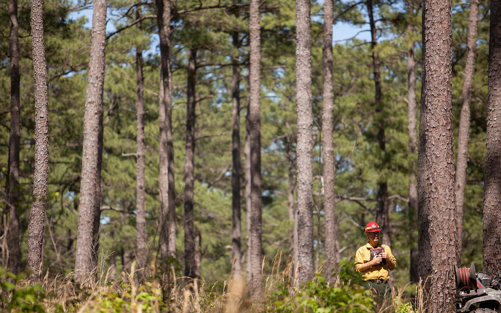 Burn boss Bobby Clontz at Piney Grove Preserve.