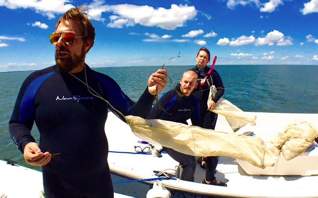 VCR Coastal Scientist Bo Lusk holds up an eelgrass shoot while explaining the seagrass seed collection process prior to volunteers entering the water.  The sack tied around his neck will be used to collect the shoots.