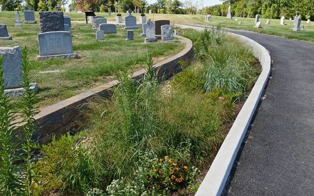 Native plants and flowers thrive in a newly planted rain garden at Mount Olivet Cemetery.