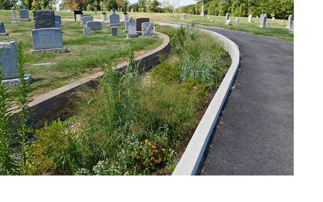 Rain gardens installed at Washington, DC's historic Mt. Olivet Cemetery to capture stormwater.
