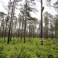 piney-grove-preserve