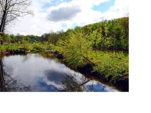 Charlottesville's Meadow Creek is one of the largest urban stream restoration projects in Virginia to date.  9,000 linear feet were restored, preserving 12 acres of wetlands.