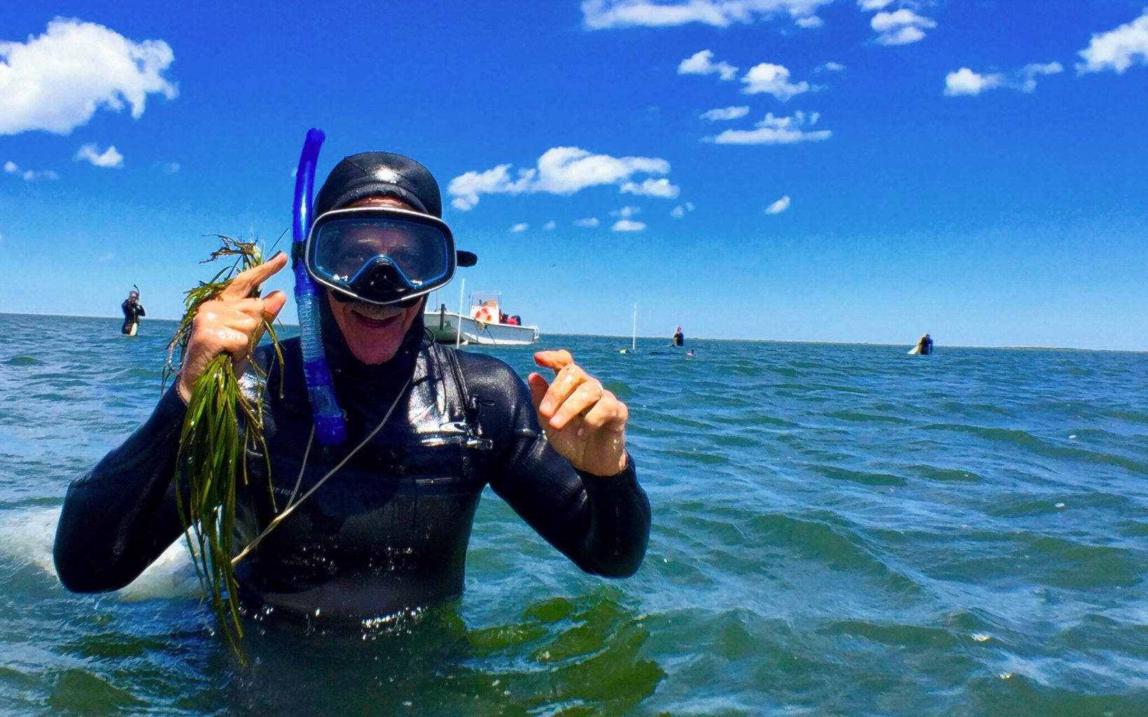 Volunteer Al McKegg collects eelgrass shoots in South Bay, Eastern Shore, Virginia.