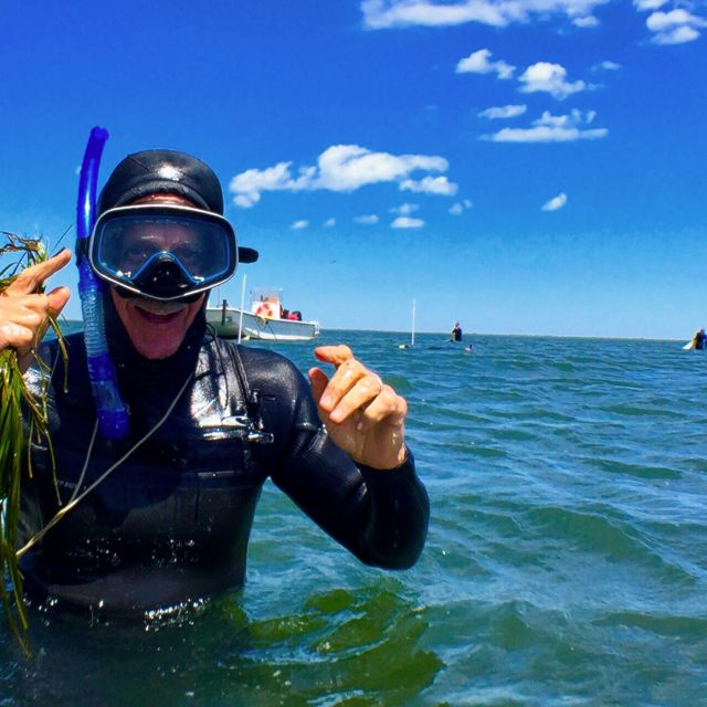 Volunteer Al McKegg collects eelgrass shoots in South Bay, Eastern Shore of Virginia.
