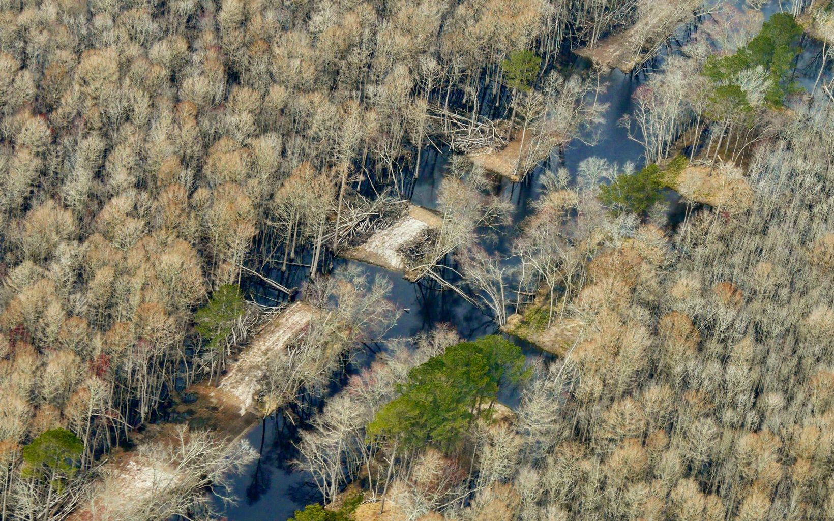 Aerial view of the Pocomoke River floodplain restoration site.